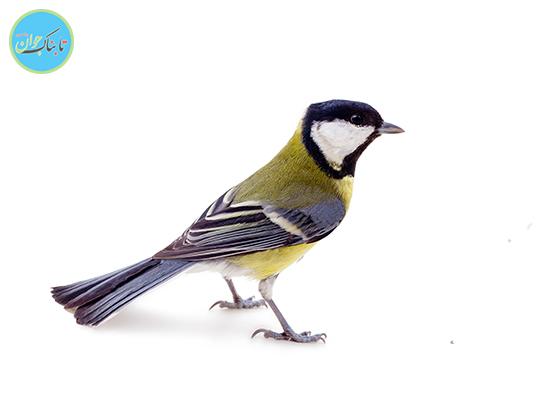 در جستجوی پرندگان کاسپین و هیرکانی