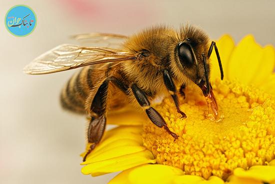 انقلاب زنبوری دنیای کشاورزی