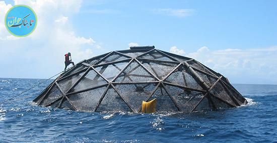 شگفتیهای ویژهی پرورش ماهی در قفس