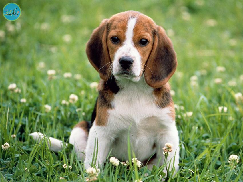 فروش سگ ۵۰۰ میلیونی در مشهد