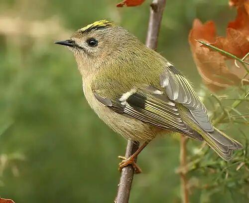 کوچکترین پرندگان ایران