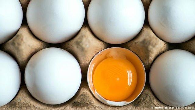 ماجرای تخم مرغ های تقلبی چه بود؟
