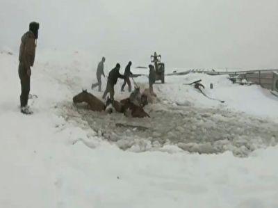 نجات اسب هادر دریاچه یخ زده توسط کشاورزان محلی