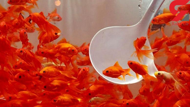 امسال ماهی قرمز بخریم؟