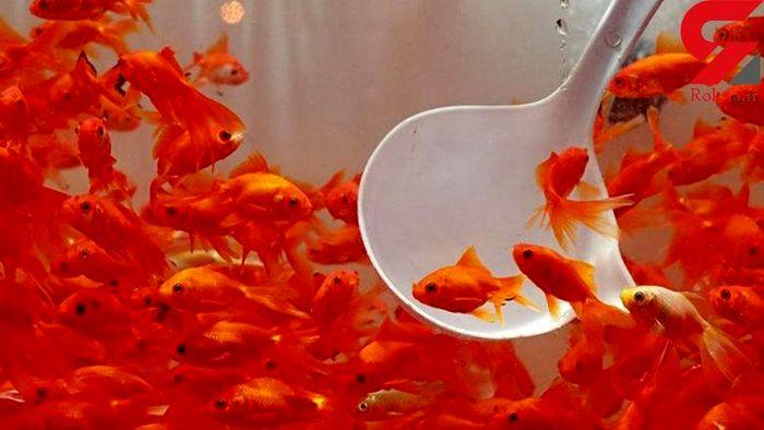 چرا نباید ماهی قرمز بخریم؟