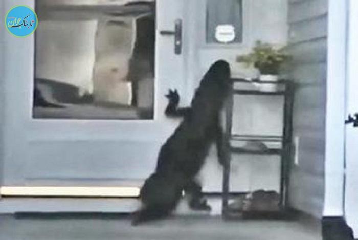 بسته خبری: تلاش عجیب تمساح برای زدن زنگ خانه!