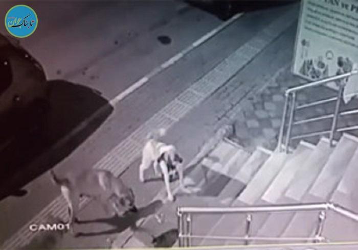 بسته خبری: حملهی عجیب یک گربه به ۵ سگ غول پیکر!