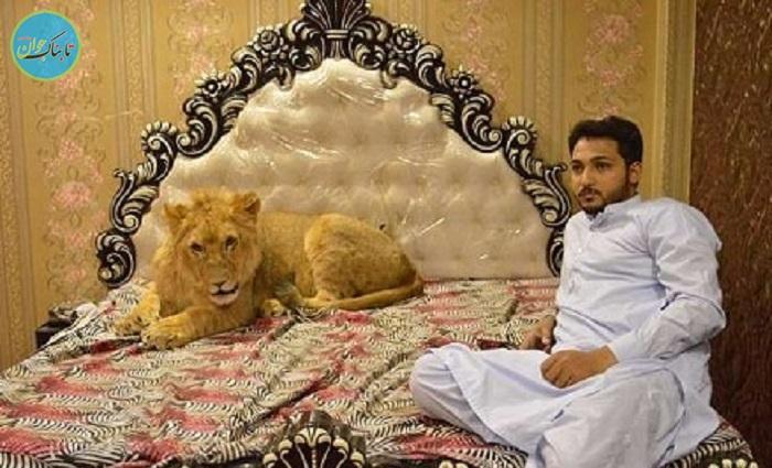 بسته خبری : حیوان خانگی خطرناک مرد پاکستانی