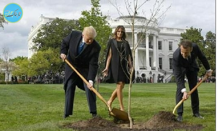 بسته خبری : درخت دوستی ترامپ و ماکرون خشک شد