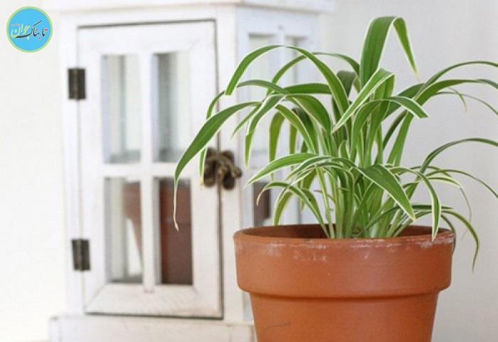 چند نکته ساده برای نگهداری گلهای آپارتمانی