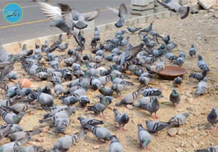 بسته خبری : شهری که در آن پرنده سالاری است!