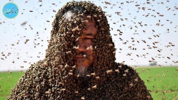 ۱۲ واقعیت جالب در مورد زنبورها