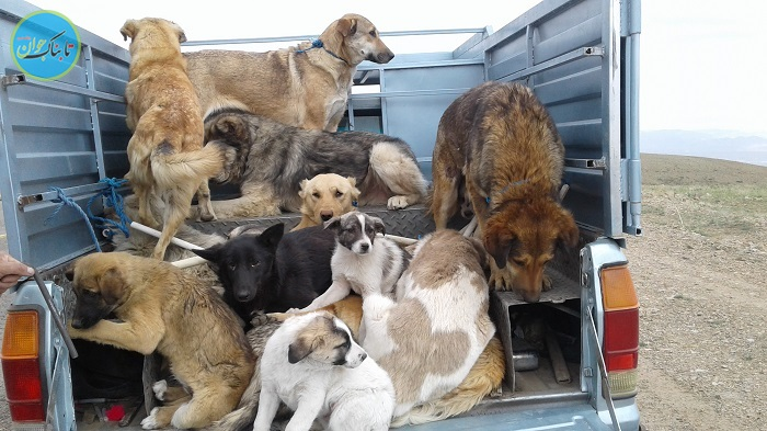 ماجرا کشتن سگ ها در تهران با آمپول اسید چه بود؟