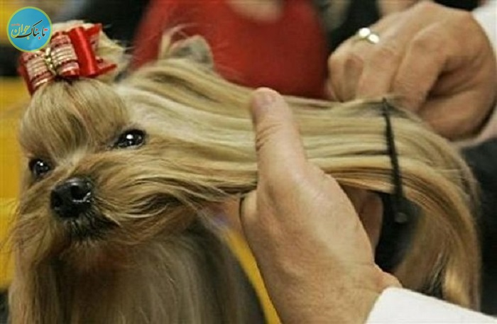 هزینههای نجومی برای آرایشگاه سگ و گربه ی بچه پولدارها