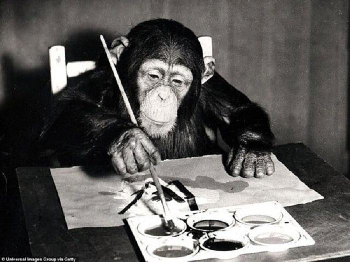مزایده ۵۵ اثر نقاشی از یک شامپانزه