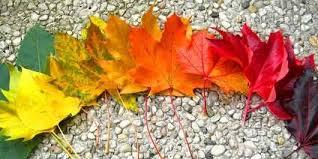 آموزش ساخت تابلوی پاییزی با برگ
