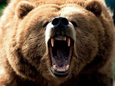 عاقبت نزدیک شدن به خرس گریزلی در جنگل + فیلم