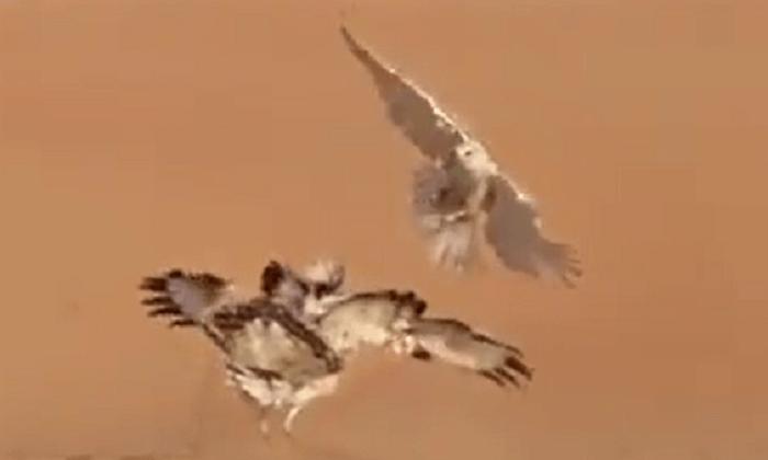 دو شکارچی