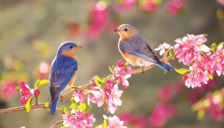 بهار و پرندگان