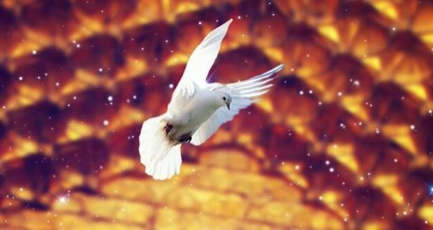 پرنده حرم