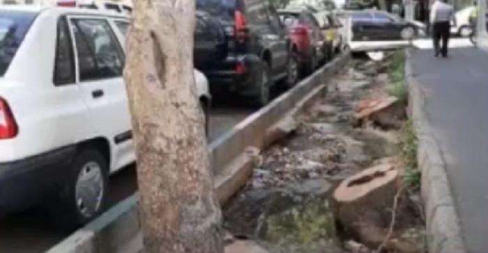 قطع کردن درختان