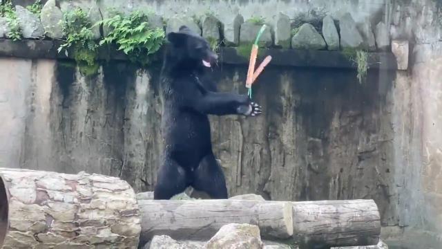 خرس مشکی