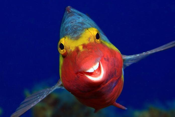 ماهی تمساح