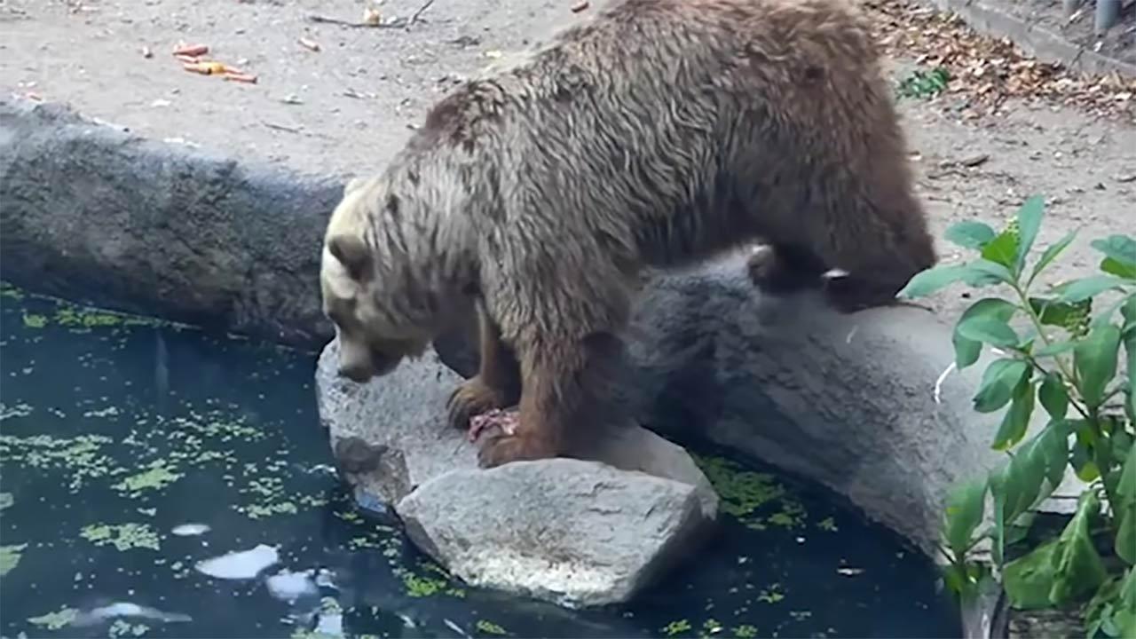 نجات کلاغ توسط خرس مهربان!