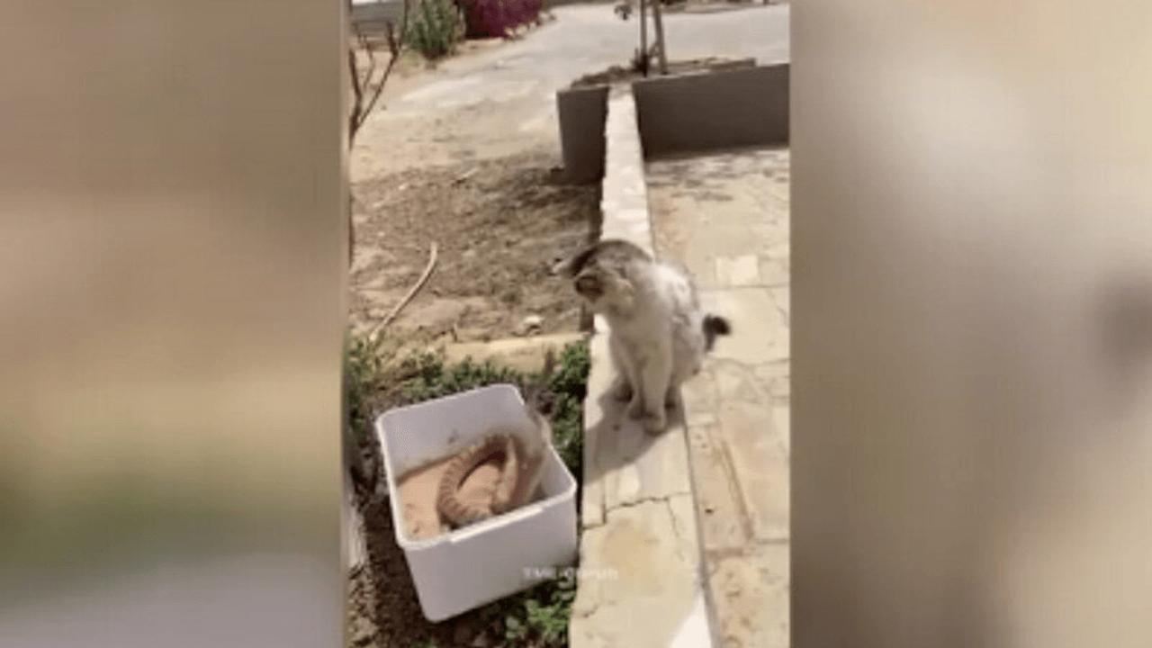 گربه و مار