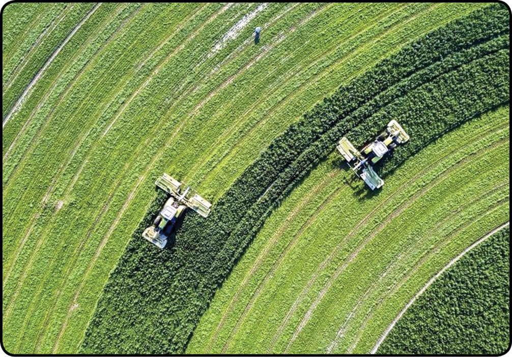 کشاورزی هلند