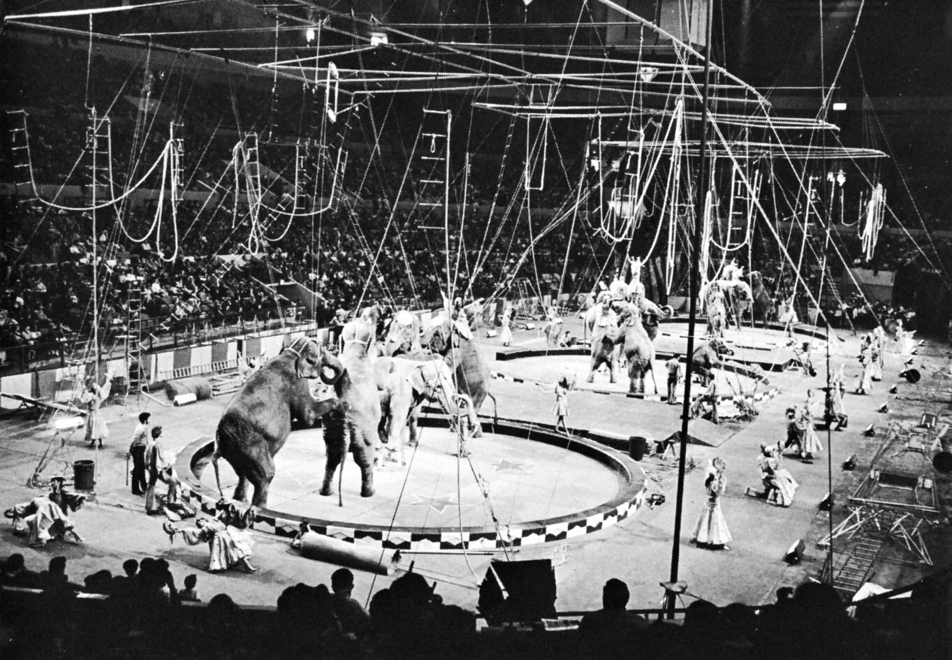 اعدام فیل
