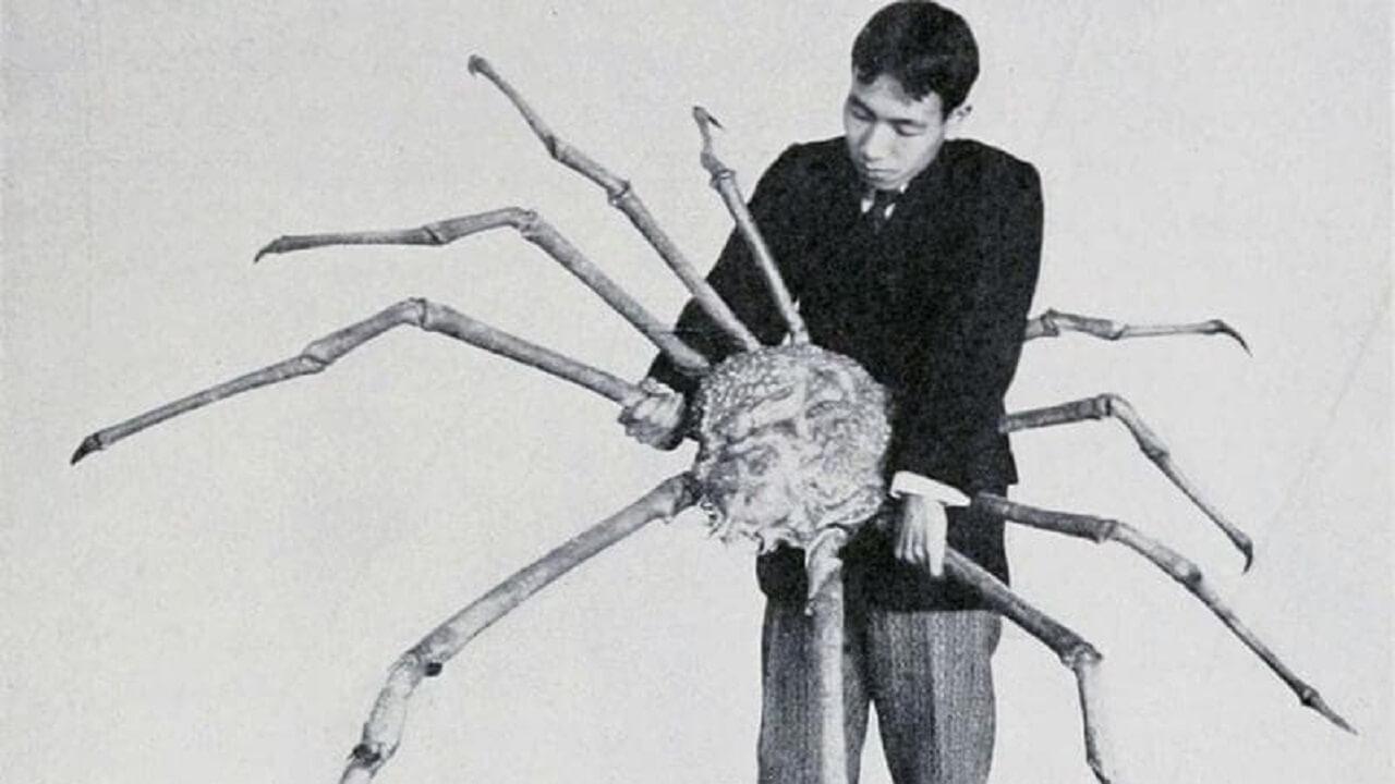 خرچنگ بزرگ