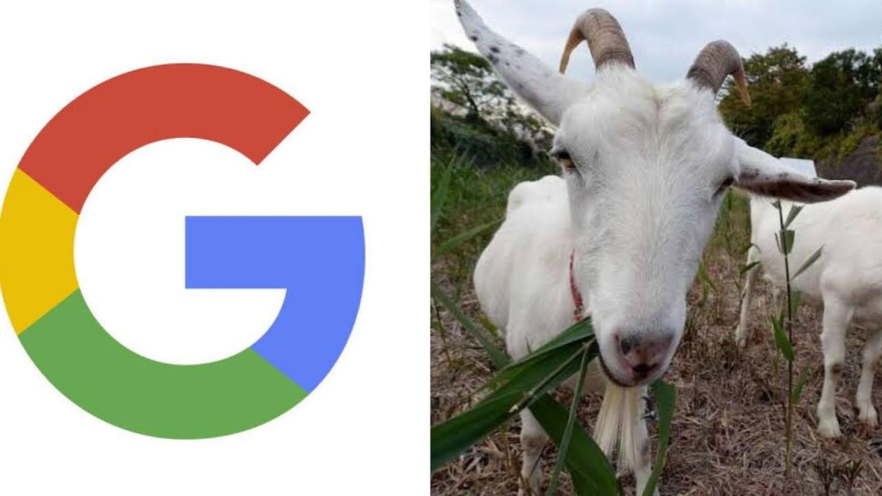 بز گوگل